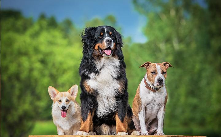 都心部で飼うのに向いている犬種