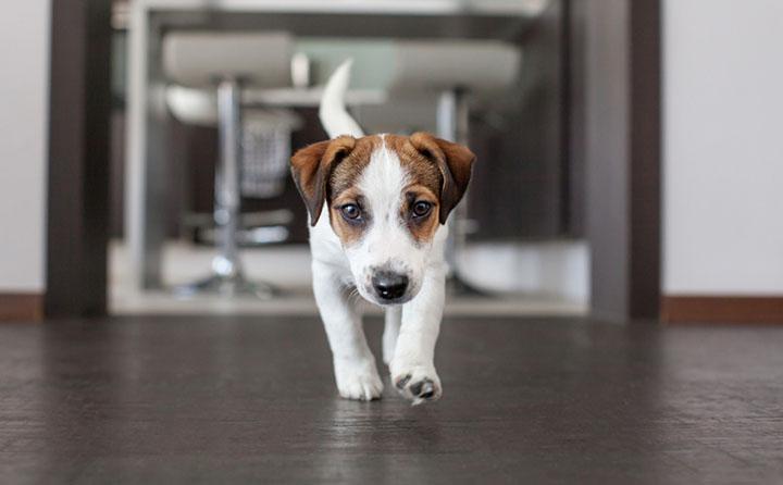 室内飼いの犬がしやすい怪我は何?