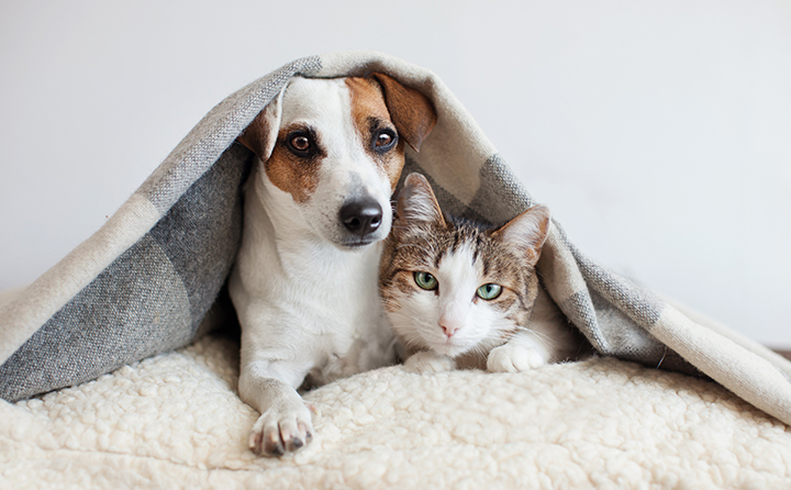 犬猫に新型コロナ感染の危険はあるの?従来のコロナウイルス についても合わせて解説
