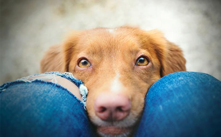 犬の目の病気を種類別に紹介
