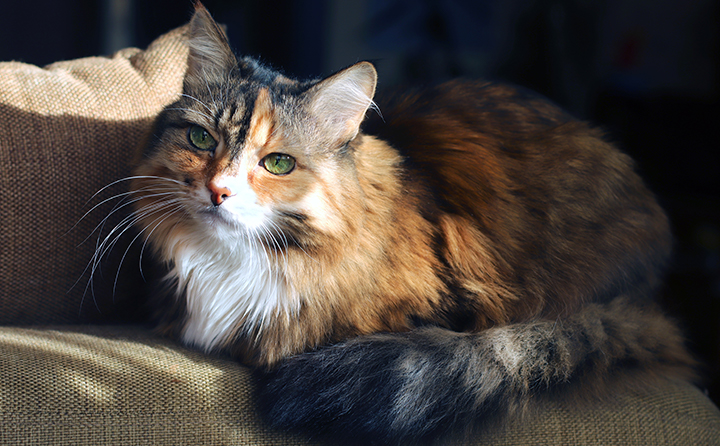 猫のハゲの原因とは?