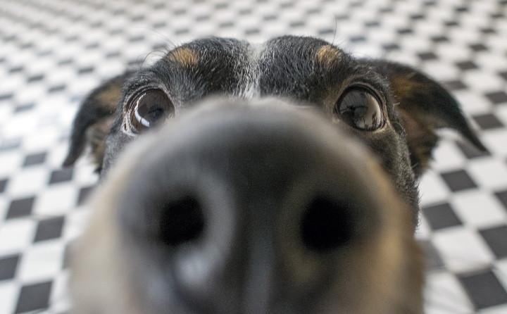 犬の鼻水について。どのような症状の時に気を付ければいいの?