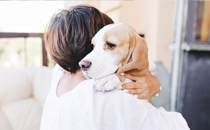犬の神経痛の原因とは?見分けるためのサインや治療法も紹介