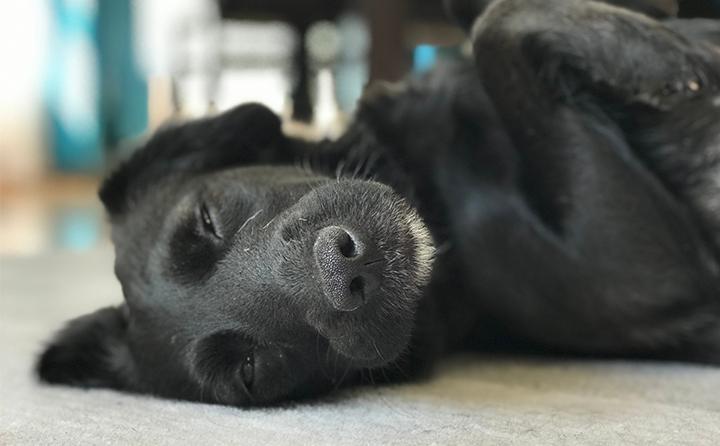 犬のてんかんの原因と症状について