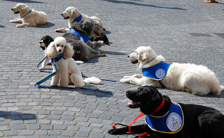 セラピードッグに向いている犬種はあるの?アニマルセラピストがおすすめの犬種を紹介!
