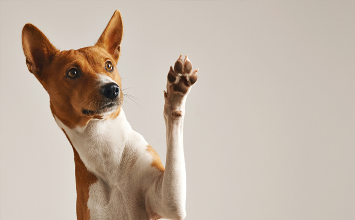 犬の肉球のトラブルとワセリン
