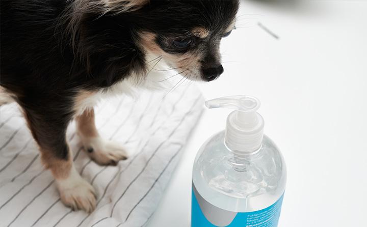 人用に売られている消毒薬は、愛犬にも使える?
