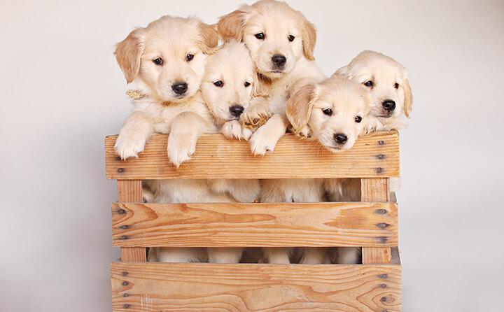 仔犬を迎えるために必要な三つのもの