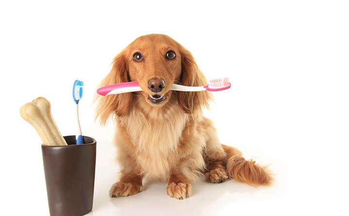 犬の歯磨きのやり方&おすすめのオーラルケア
