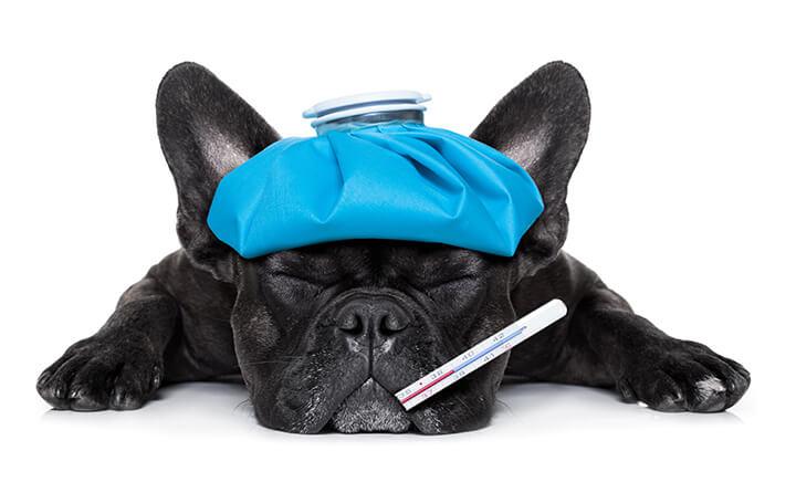 最悪の場合死亡することも……犬の熱中症の症状と対処法