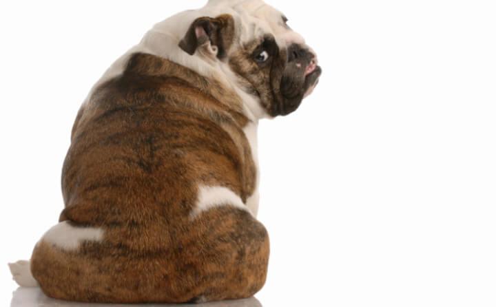 早めの判断が大切!犬の僧房弁閉鎖不全症の原因と症状について