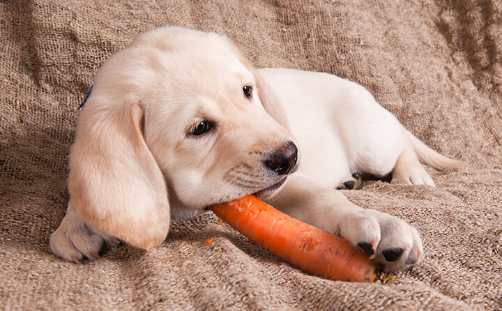 犬がドッグフード以外で食べていいもの
