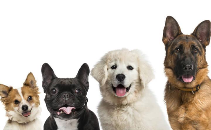 飼い主に合った犬の種類の選び方