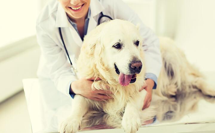 シニア犬がかかりやすい病気とその症状