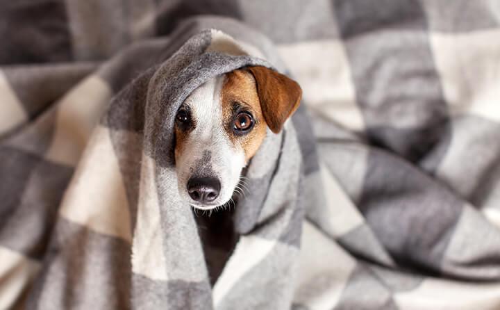 愛犬がフィラリアにかかったらどうする?フィラリア検査の重要性と予防法