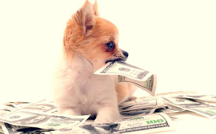 犬の避妊・去勢手術を行う時期と費用