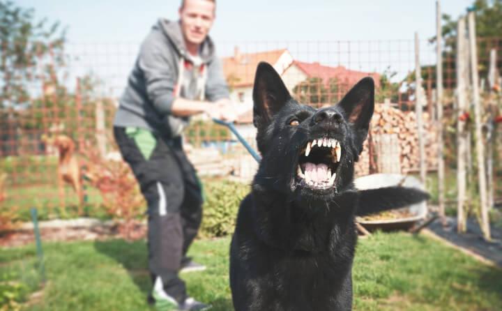犬が無駄吠えをする理由