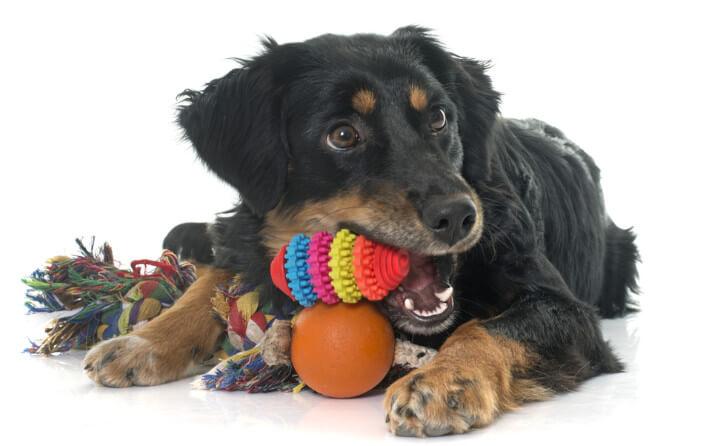 犬の誤飲、真っ先にとるべき対処法とは?