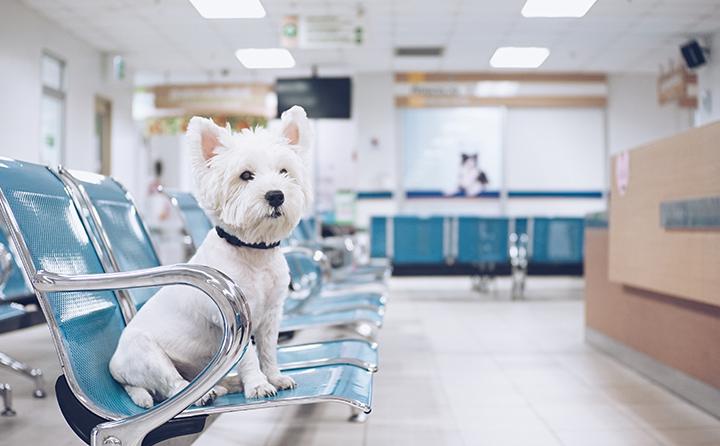 初めて犬を飼う方必読!動物病院の選び方