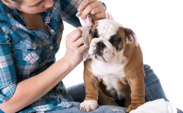 犬の耳が汚れる原因とお手入れの方法