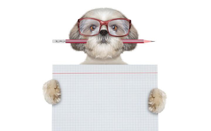 動物介在教育って何?国内での普及や実施効果について