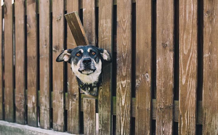 犬のキズ以外の怪我について