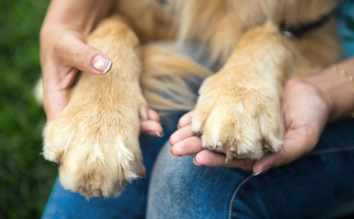犬の肉球の怪我について
