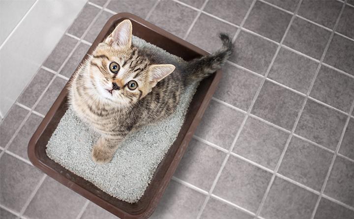 猫のトイレトレーニング