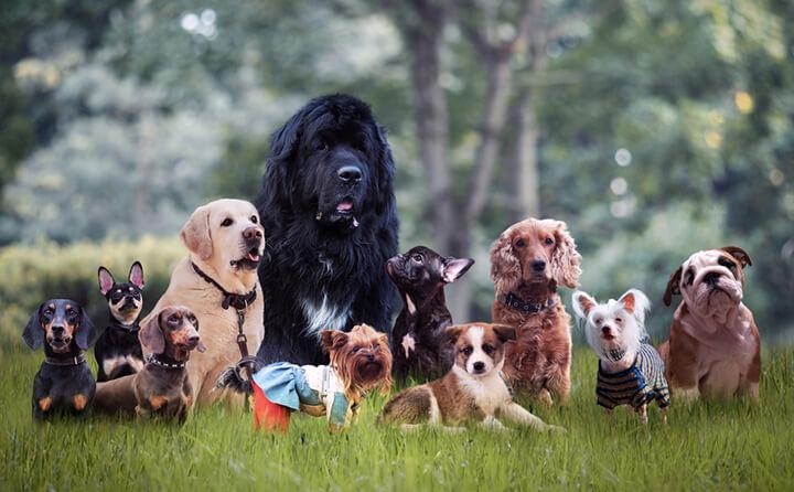 犬種の選び方をドッグトレーナーのディープな目線で解説!