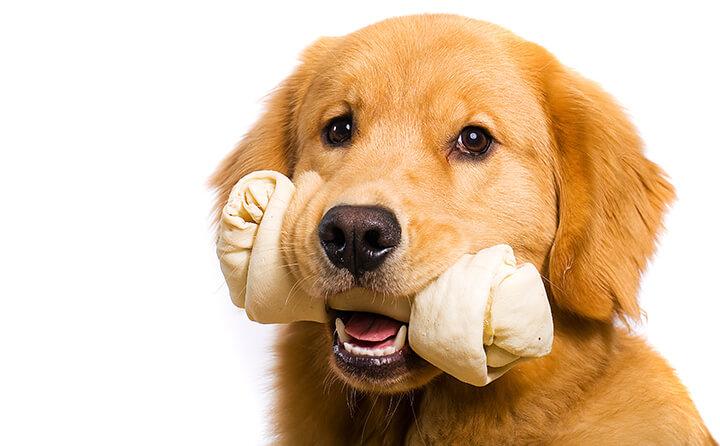 あなたの愛犬は大丈夫?犬の歯周病の種類と治療法