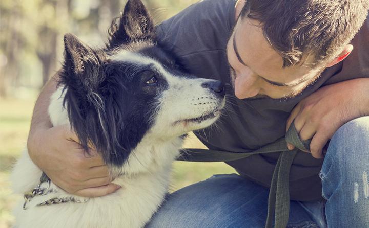 犬のしつけ方としつけに対する姿勢