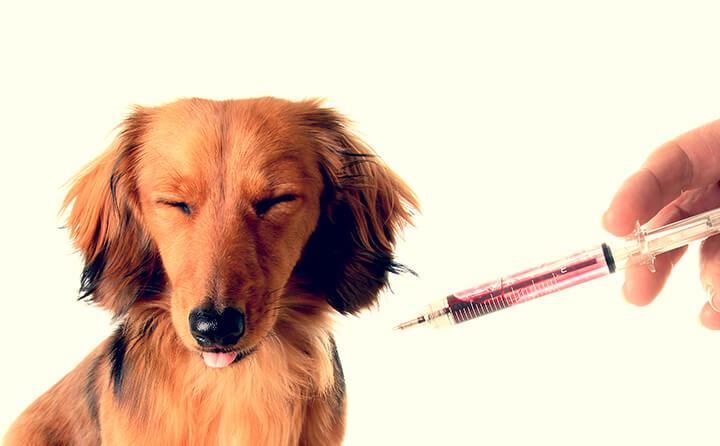 犬にワクチンは毎年必要?犬ワクチンの種類・費用について