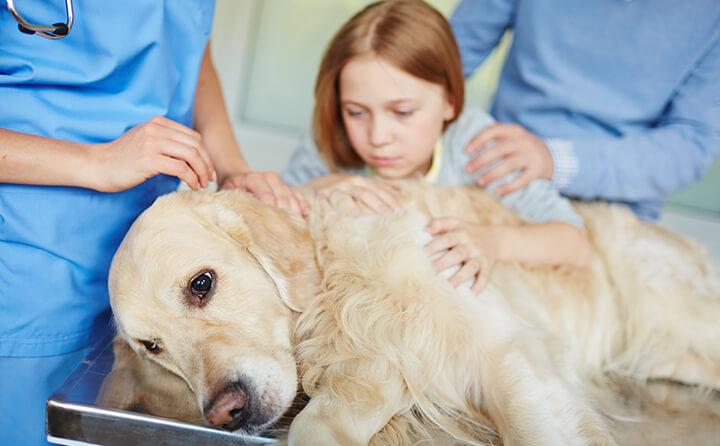 シニア犬に起こりやすい体の変化と体調不良とは?