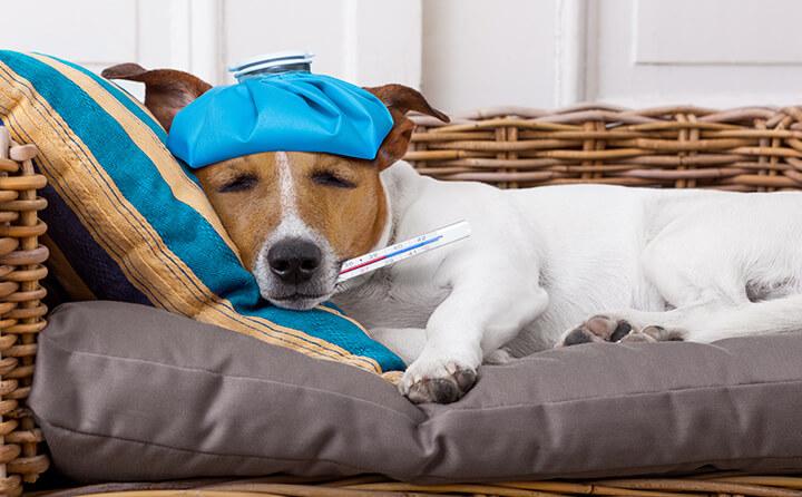油断大敵!犬の風邪の症状について