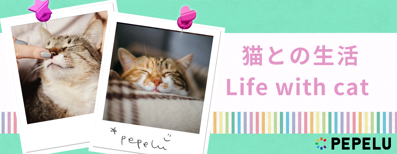 猫との生活