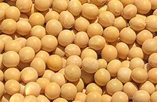 中国産大豆